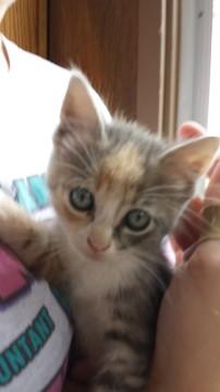 Sweet little kitten.