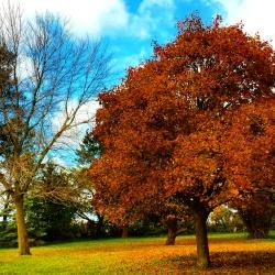 I do so love breezy fall days.