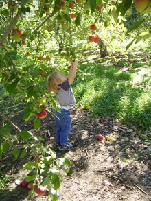 """Come here you...stubborn...apple!"""